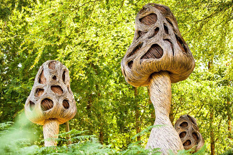 Link to UK Native Edible Fungi at Royal Botanic Gardens, Kew - Project